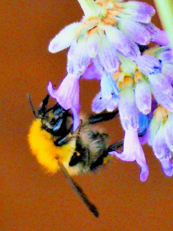 Bee on Flower by FWR