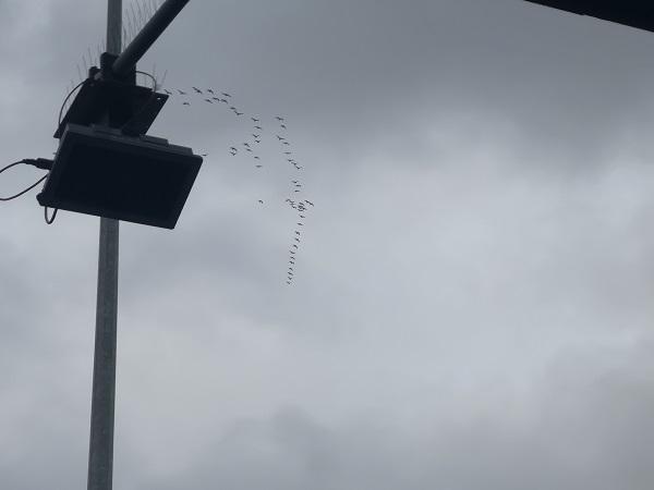 Birds in Flight by Freewayriding