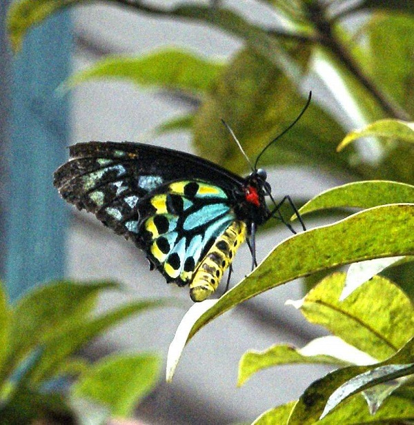 Butterfly by FWR