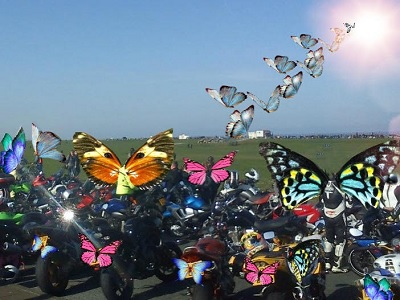 Butterfly bikers, who only ride in good weather.