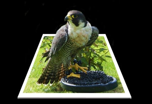 Eagle by FWR