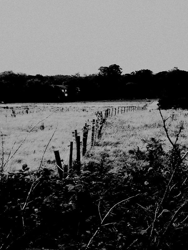 Evening Walk by FWR.