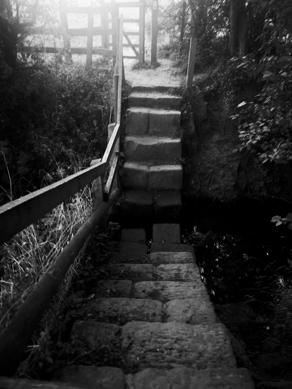 Steps going up and down by FWR.