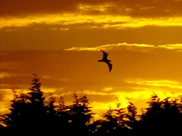 Sunrise by FWR