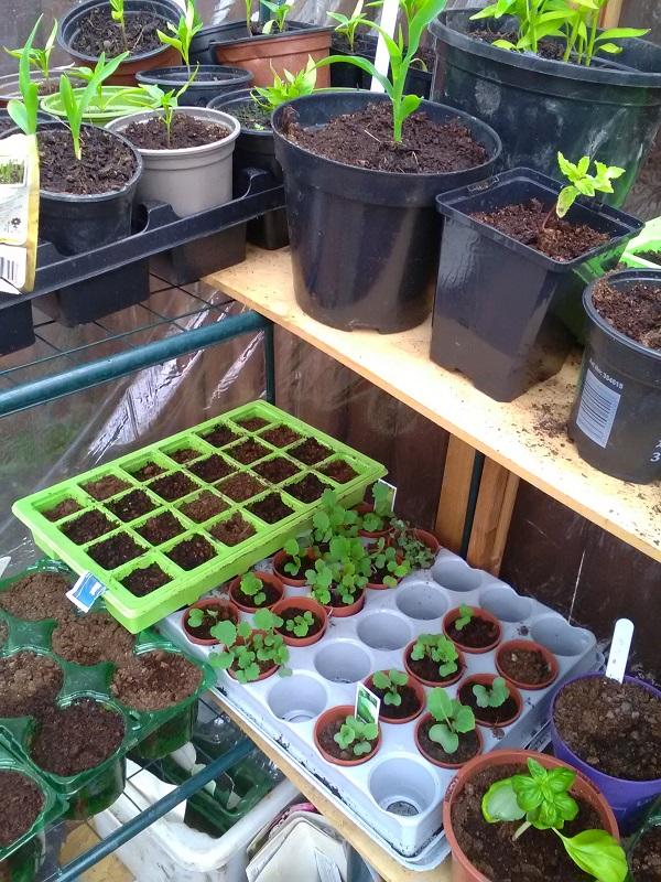 Mystery Seedlings by FWR