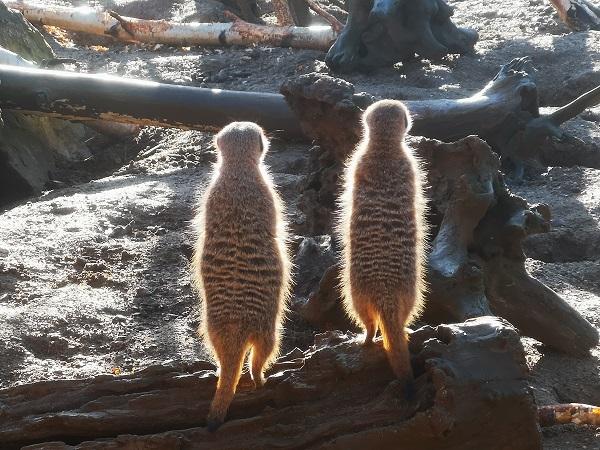 Radioactive Meerkats by Freewayriding