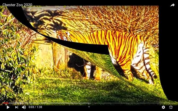 Big Cats By Freewayriding