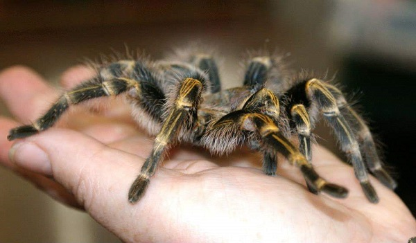 Spider by FWR.