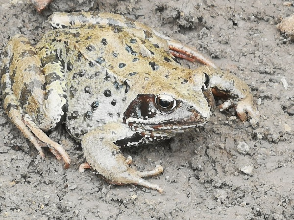 FWR's toad visitor