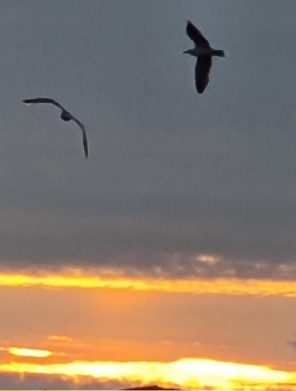 Two seagulls in the early morning sky, by FWR.
