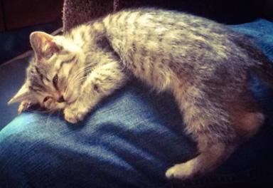Farmer Hoggett's Therapy Cat, Naomi, by Mrs Hoggett