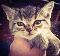 Hoggett Kitten #42
