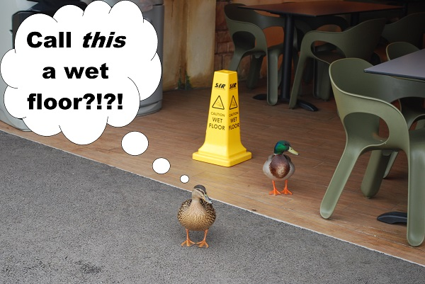 Disappointed Ducks by Bluebottle. They're wandering around a perfectly dry floor that has a 'wet floor' sign.