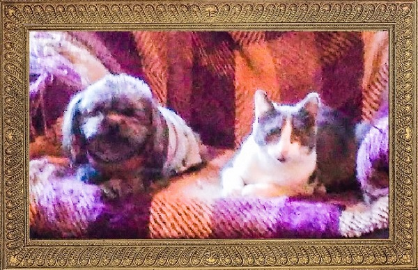 Molly the Editorial Assistant Kitty and Lola the Doglet pose for their holiday photo.