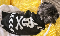 Lola the Doglet wearing her rad new black-and-white jumper with the skull-and-crossbones. Lola's a badass.