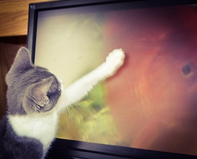 Molly the Editorial Assistant Kitty watches virtual fish in her free time.