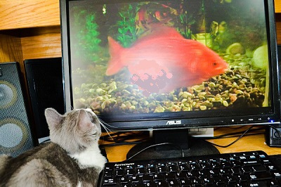Molly the Editorial Assistant Kitty studying a BIG fish.