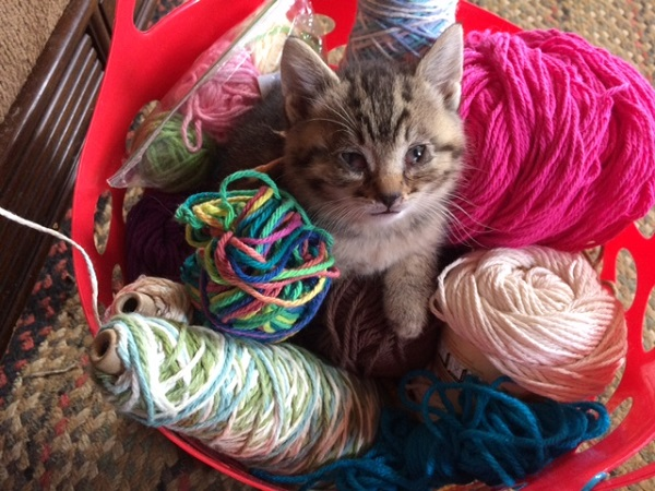 Buddy in the Yarn Basket by Mrs Hoggett