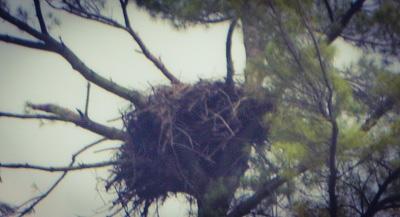 Eagle's Nest by Mrs Hoggett