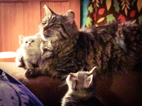 Hoggett cats babysitting.