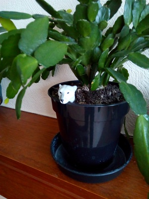 Polar Bear Hiding in Yorkshire House Plant by Prof Animal Chaos