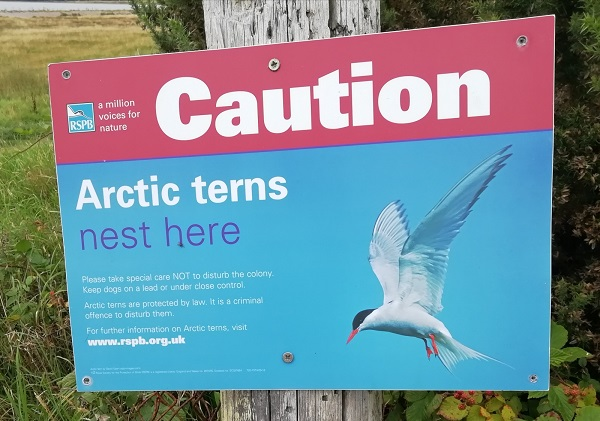 Sign saying, Arctic terns nest here, by Paigetheoracle