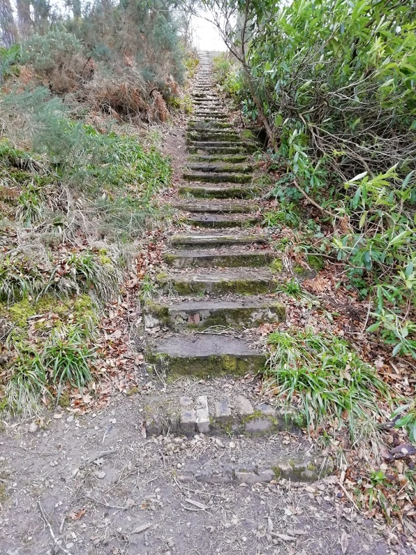 Steps in the Woods by Paigetheoracle