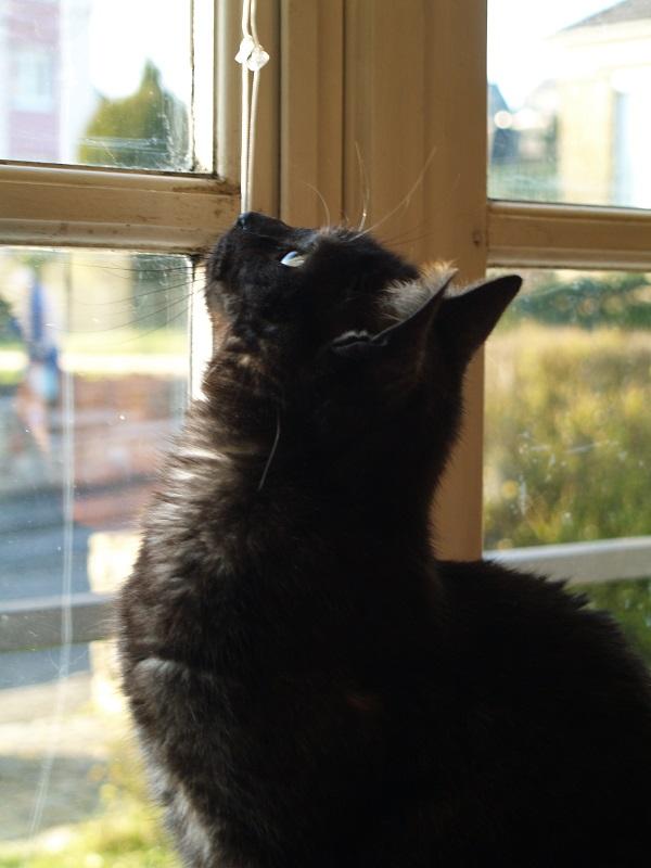 Roxy, the black cat