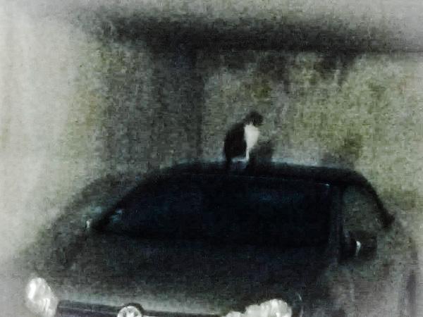 Cat visiting Superfrenchie's garage.