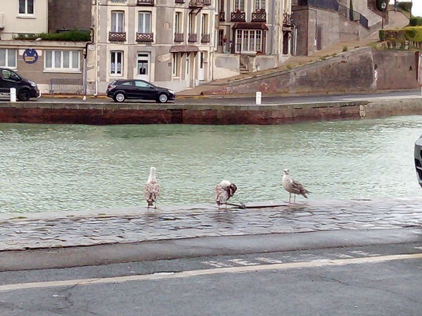 Gulls by Superfrenchie. She calls them'hooligulls'. Maybe they stole her sandwich.