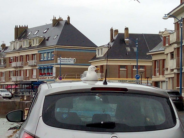 Seagull Sitting on Car by Superfrenchie