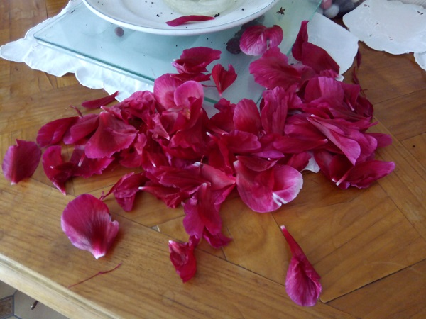 Last stage of Superfrenchie's sister's peonies.