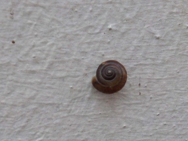 Tiny Snail by Superfrenchie