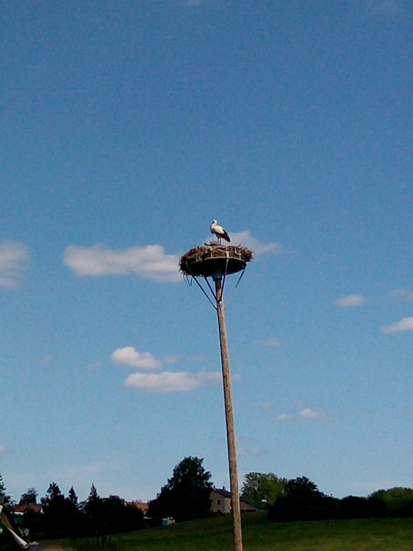 Stork Nesting by Superfrenchie