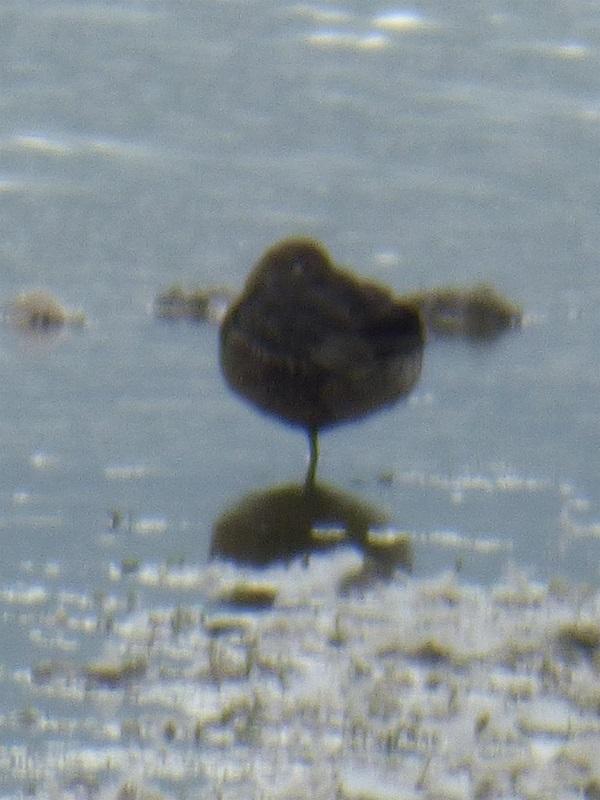 Bird Onna Stick by SashaQ.