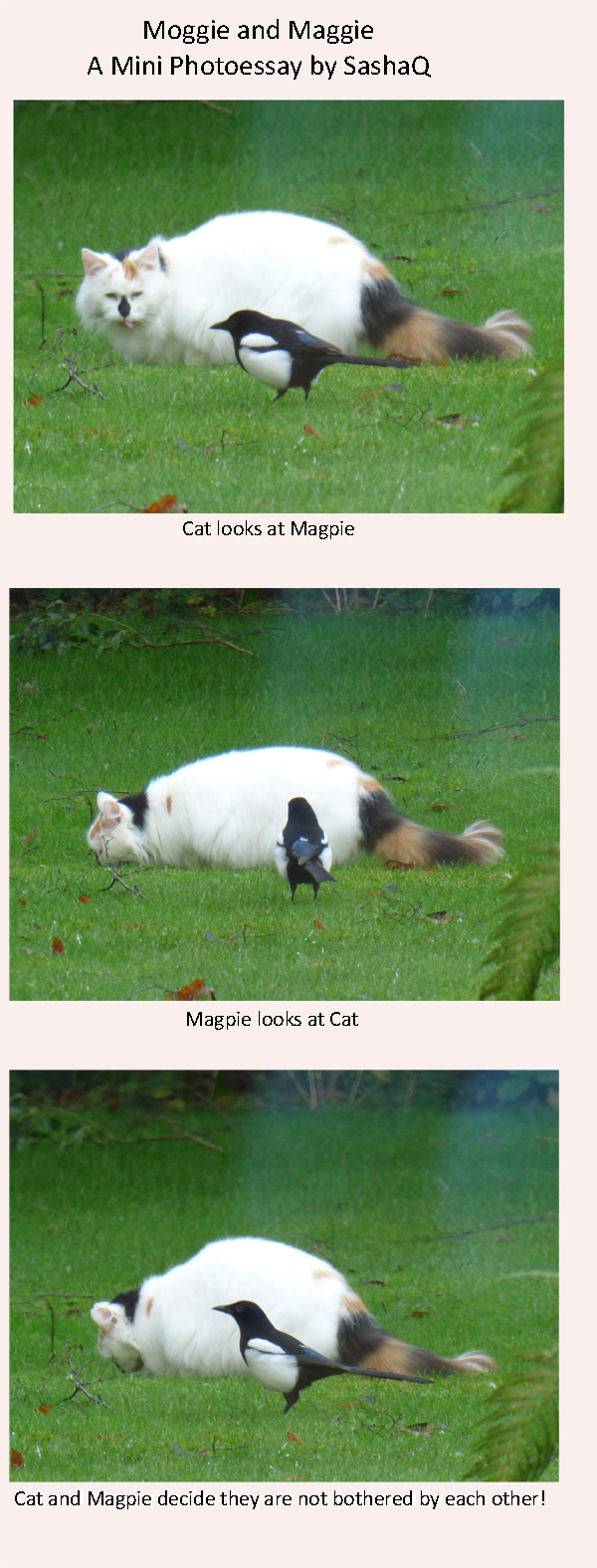 Cat looks at Magpie, Magpie looks at Cat - Cat and Magpie decide they are not bothered by each other!