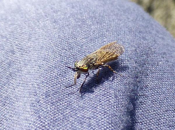 Mystery Bug by SashaQ.
