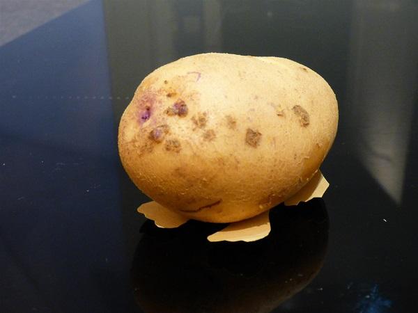 Potato Hamster by SashaQ