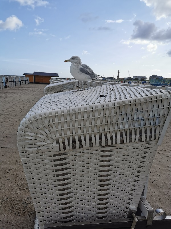 Seagull at Warnemuende by Sho.