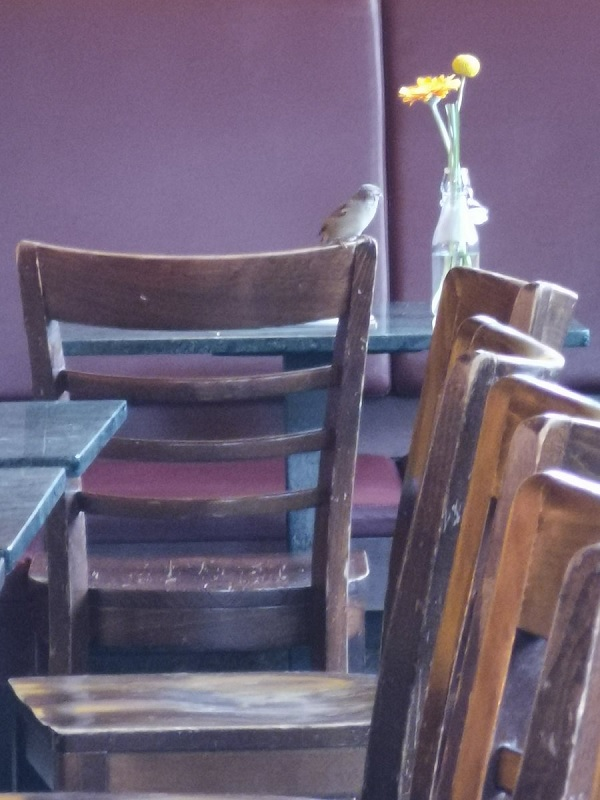 Sparrow in a cafe.