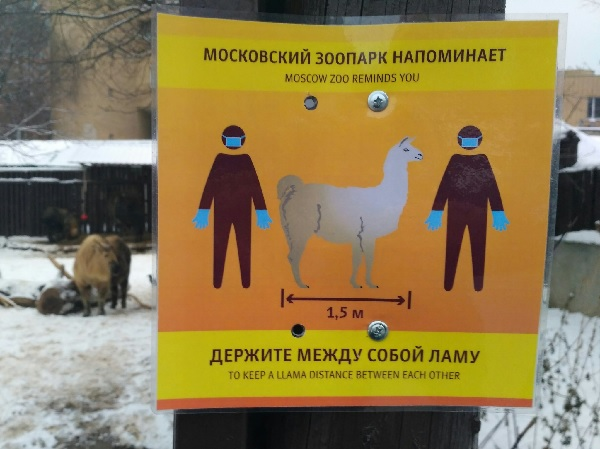 A sign about keeping a llama distance between you at the Moscow zoo, by Solnushka.