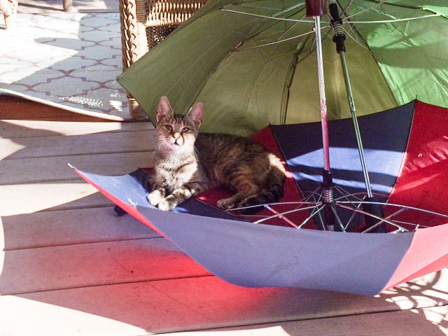 Sweetie with Umbrellas by Mrs Hoggett