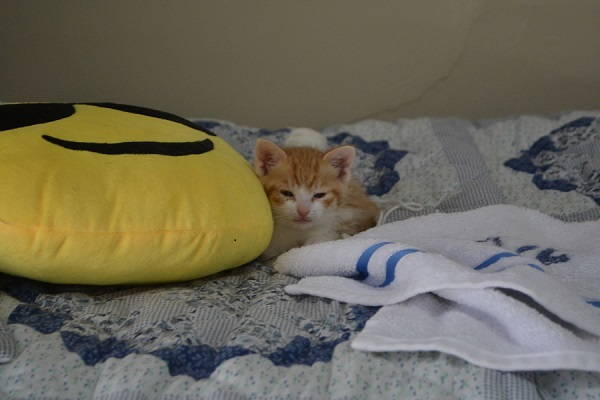 TJ the kitty is only 8 weeks old, but he knows where his towel is.