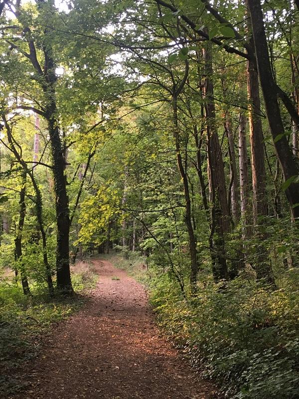 A woodland walk in Austria.