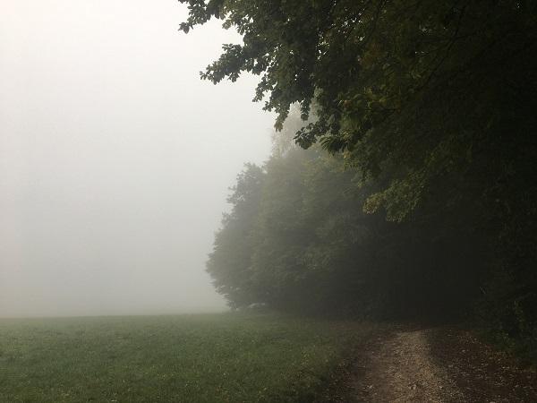 Foggy Morning in Austria by  Tavaron.