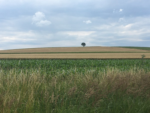 Wide Horizon with Lone Tree by Tavaron
