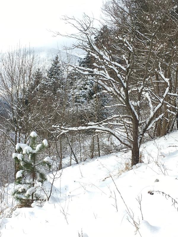 Snow in an Austrian Garden by Tavaron