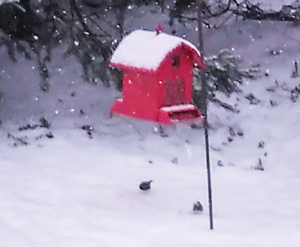 Birds at the feeder in snow.