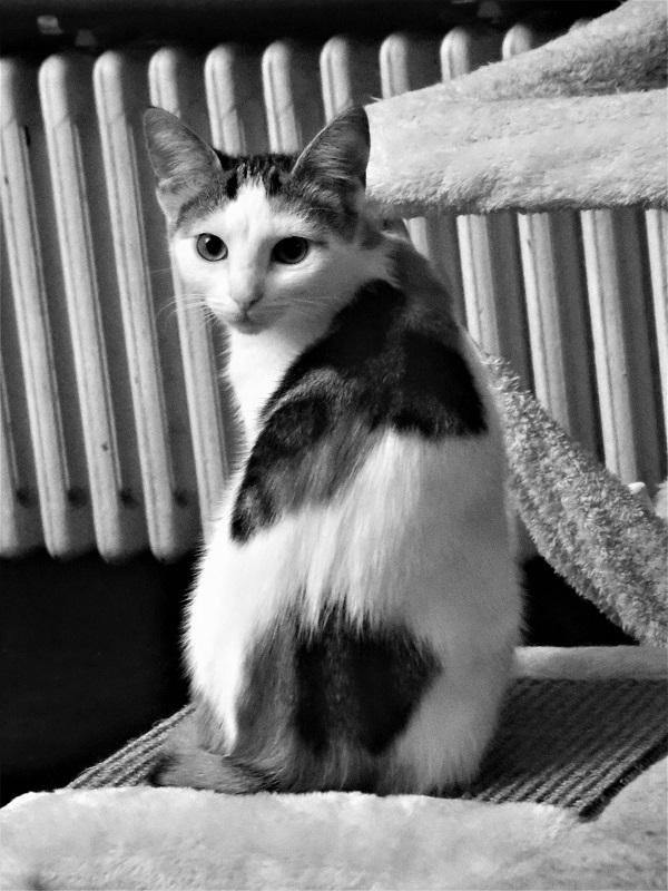 Obligatory Cat by bobstafford