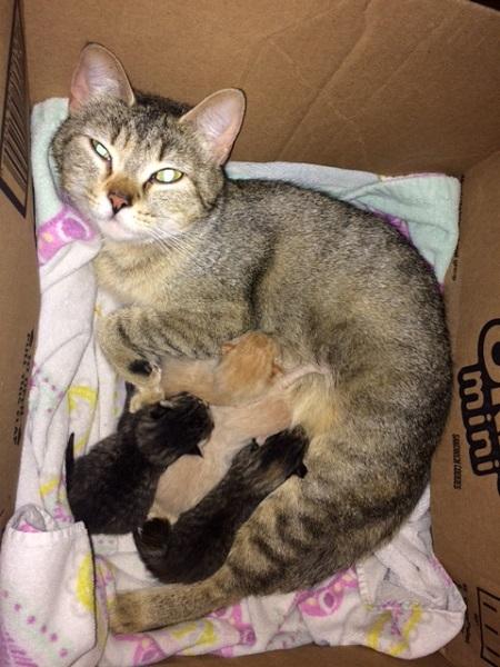 Tubby's new kittens.